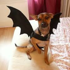 Funny Halloween Costumes Cats Dog Kodathesamoyed Beanie Baby Costume Halloween