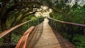 the boomslang a walkway above the trees in south africa places