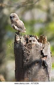 owl sitting on tree stock photos owl sitting on tree