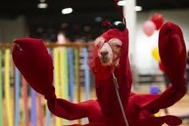 Lobster Costume Llama Costume Contests May Be The Key To Inner Peace The Frisky