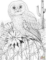 northern spotted owl coloring page free printable coloring pages