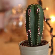 cacti gallery craftgawker