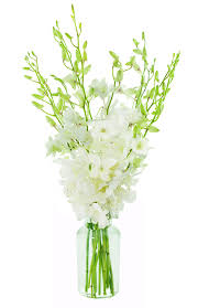 amazon com all white dendrobium orchid bouquet 10 stems with