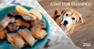 thanksgiving foods you can with your pets taste of the
