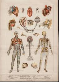 Anatomy And Physiology Human Body 49 Best Science Illustrations Medical Images On Pinterest Human