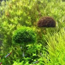 christmas tree fish tank moss water grass decoration moss not