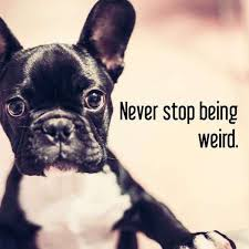 Meme Generator Dog - this ai inspirational meme maker gets it all wrong 34 photos
