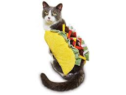 Hilarious Costumes 10 Hilarious Costumes For Your Cat I Can Has Cheezburger