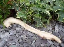 carved wood lizard gecko ornament reptile garden ornament ebay
