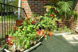 Patio Vegetable Garden Ideas The Exciting Of Potted Vegetable Garden Diy By Utilizing Large