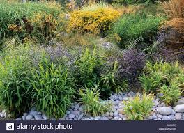 rhs wisley surrey ornamental grasses and perennials with pebble