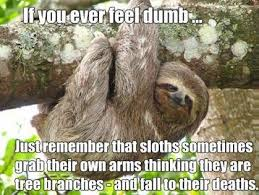 Sloth Meme Jokes - best dirty sloth memes dirty best of the funny meme