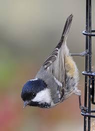 best 25 bird pictures ideas on pinterest pretty birds