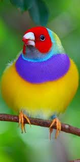 angry bird check photography