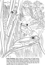 pond coloring page 100 images ducks play together in pond