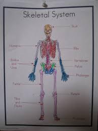 dottie u0027s homeschool universe human body systems