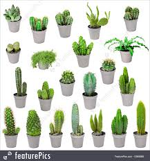 indoor plants images set of indoor plants in pots cactuses isolated on white image