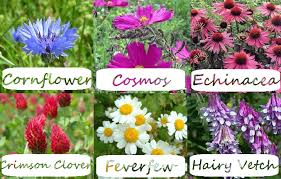 All Types Of Flowers List - list of flowering plants list diy home plans database
