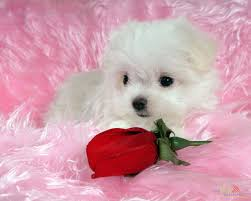 white baby dog wallpaper 15322