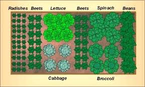 easy vegetable garden planner simple ideas for beginners and