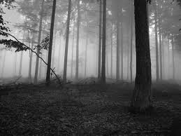 halloween dark forest background 600x600 black and white scary forest pictures to pin on pinterest pinsdaddy