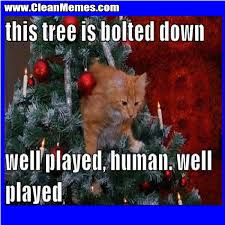 Cat Christmas Memes - tree is bolted down clean memes