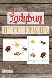 life cycle of a ladybug worksheets