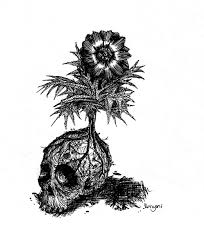 skull and flower by vergani on deviantart