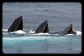 Whale Watches Cape Cod - the top 10 things to do near cape cod mall hyannis tripadvisor