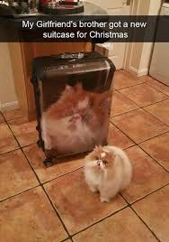 I Can Has Cheezburger Meme - 23 new and hilarious cat snaps i can has cheezburger funny cats