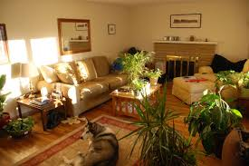 Room With Plants Living Room Decorating Ideas For Apartments New Home Ideas
