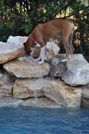 boxer dog keeps coughing boxer dog boxer breed pinterest dogs boxer dogs and boxers