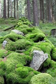 Rock In Garden Mossy Rock In Garden Domain Free Photos For