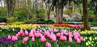 flower garden in amsterdam tiptoe through the tulips in keukenhof gardens in the netherlands