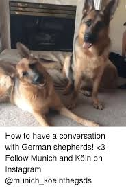 German Shepherd Memes - 25 best memes about german shepherd german shepherd memes
