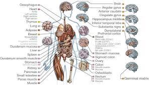 Anatomy Of Human Heart Pdf Compbio Mit Edu Mit Computational Biology Group