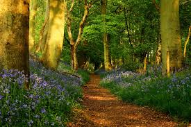all things pollyanna u2013 path in the forest beautiful beauty big