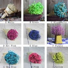 compare prices on decorative dried flowers online shopping buy