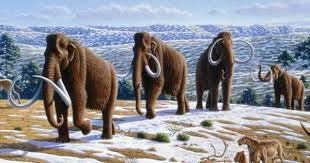 wild woolly facts wild woolly mammoth