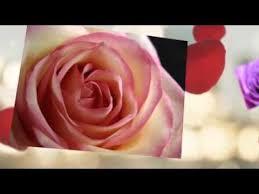 Flowers Colors Meanings - flowers colors meanings youtube