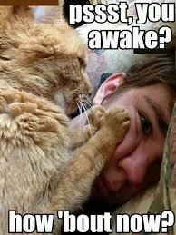 Funny Morning Memes - funny morning memes memeologist com
