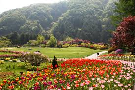 enjoy the seasons with flower festivals korea net the official