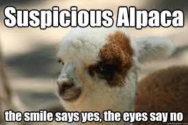 Alpaca Meme - suspicious alpaca the smile says yes the eyes say no suspicious