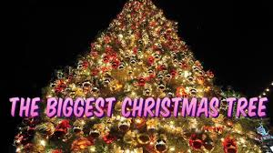 worlds biggest christmas tree youtube