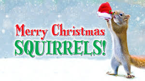 merry squirrels by nancy