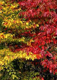 why leaves change color in the fall growing a greener world