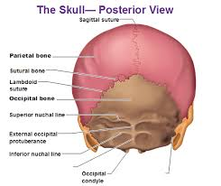 Parts Of Ethmoid Bone Geography Of The Skull