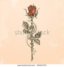 rose stem stock images royalty free images u0026 vectors shutterstock