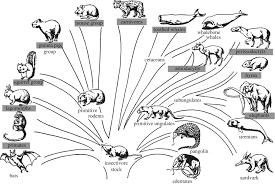 genetic diversity of toxoplasma gondii in animals and humans
