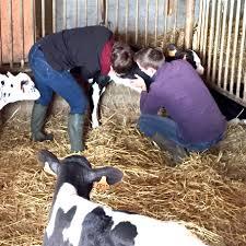 chambre agriculture du nord chambre agriculture nord pas de calais 100 images agriculture